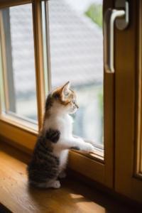 Ablakfelújítás –  Vannak buktatói egy ablakcserének?