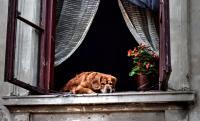 Ablakfelújítás – Hasznos útmutató a fa ablakokhoz