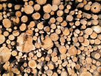 Ablakfelújítás - Miért megújuló energia a fa?