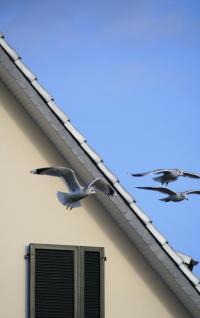 Ablakfelújítás – Ablaküvegek és a madarak – mitől lesznek agresszívek?