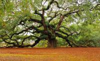 Ablakfelújítás – Miért kell a fát gondozni?