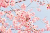 Ablakfelújítás – Varázsoljuk otthonunkba a tavaszt! I.